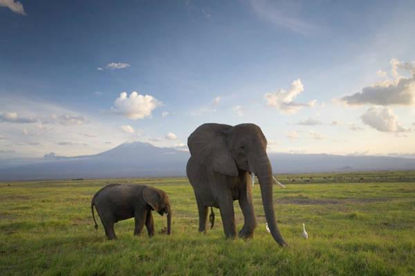 Mt. Adams Photograph - Kenya, Elephant And Infant On Plain by Peter Adams