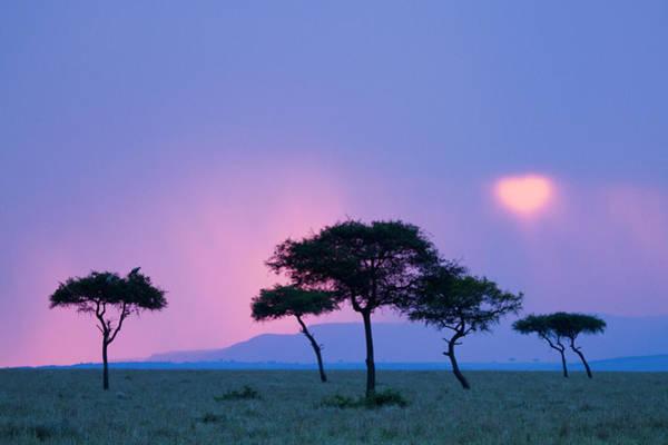 Rain Photograph - Kenya, Masai Mara Game Reserve, Rain At by Denis-huot Michel / Hemis.fr