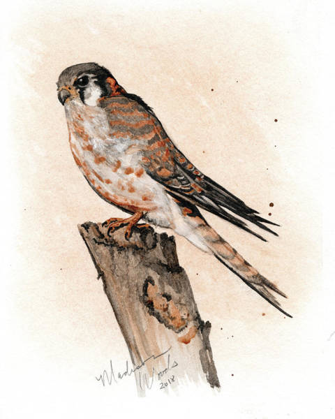 Wall Art - Painting - Kestrel No. 3 by Madison Woods