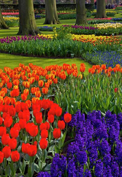 Dutch Tulip Photograph - Keukenhof Gardens In Holland by Darrell Gulin