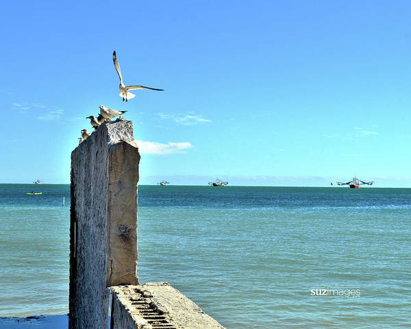 Photograph - Key West Blues by Susie Loechler