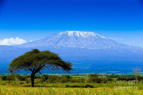 Roofs Photograph - Kilimanjaro On African Savannah by Andrzej Kubik