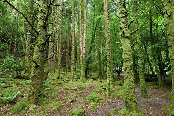 Killarney Photograph - Killarney National Park by Maremagnum