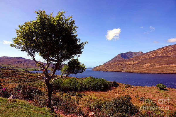 Wall Art - Photograph - Killary Fjord Tree  by Olivier Le Queinec