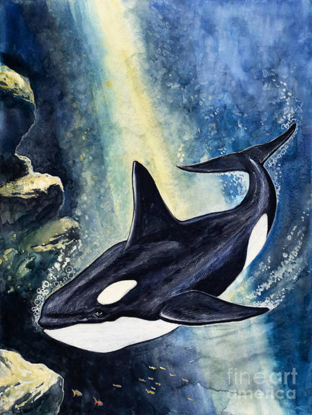 Wall Art - Painting - Killer Whale by Gw Backhouse