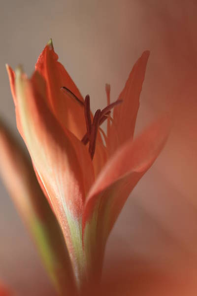 Peach Flower Wall Art - Photograph - Kindness Matters by Az Jackson