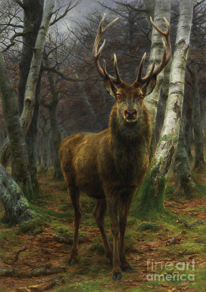 Wall Art - Painting - King Of The Forest by Rosa Bonheur