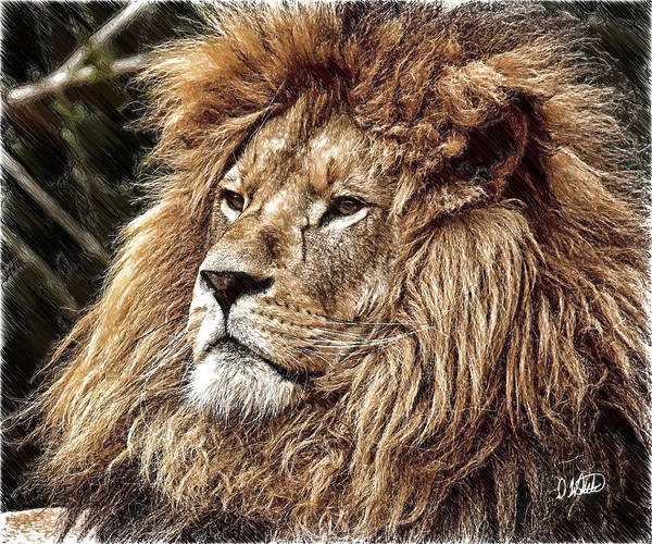 Drawing - King Of The Jungle - Dwp3583963 by Dean Wittle