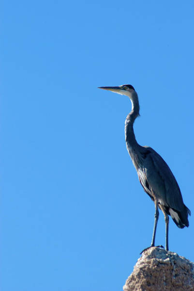 Camera Raw Photograph - King Of The Perch by Brenton Cooper
