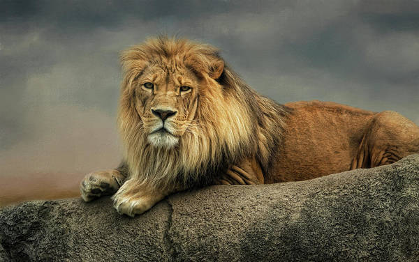 Photograph - King Of The Rock by Kelley Parker