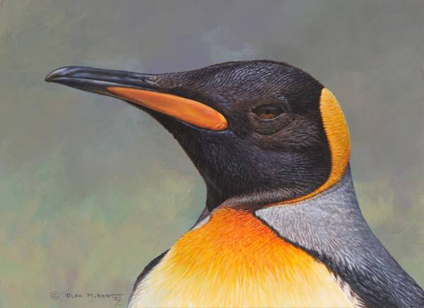 Painting - King Penguin Portrait By Alan M Hunt by Alan M Hunt