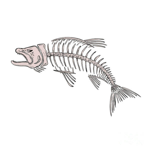 Wall Art - Digital Art - King Salmon Skeleton Drawing by Aloysius Patrimonio
