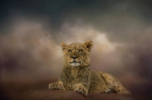 Photograph - King To Be by Kelley Parker