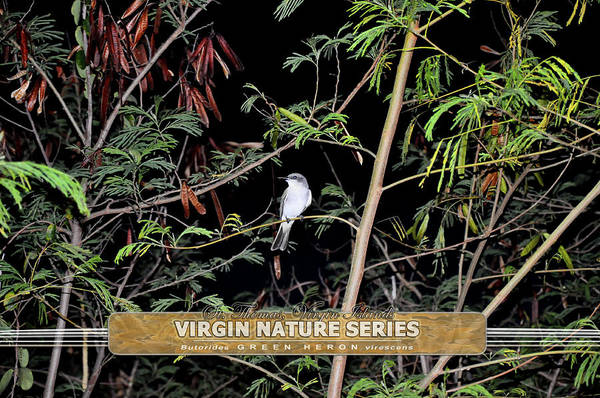Photograph - Kingbird In Casha - Virgin Nature Series by Climate Change VI - Sales