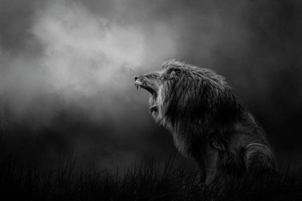 Photograph - Kingdom Cry by Kelley Parker