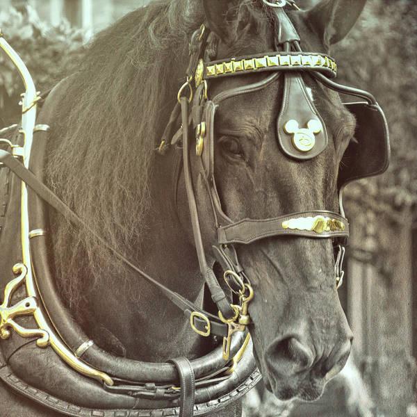 Photograph - Kingdom Ride by Jamart Photography