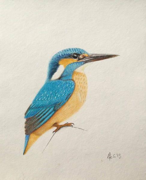 Wall Art - Painting - Kingfisher by Ele Grafton