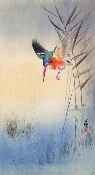 Wall Art - Painting - kingfisher hunting fish - Digital Remastered Edition by Ohara Koson