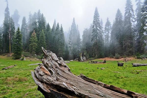 Photograph - Kings Canyon Big Stump Trail by Kyle Hanson