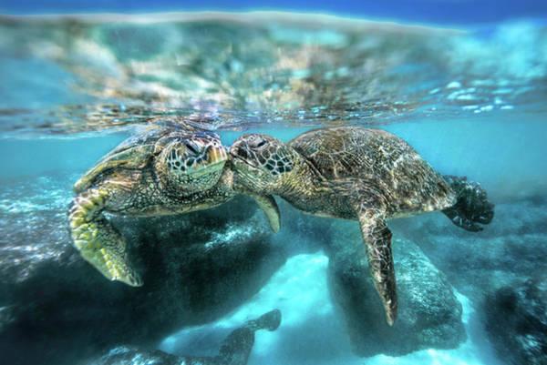 Green Sea Turtle Photograph - Kissing Turtle by Leonardo Dale