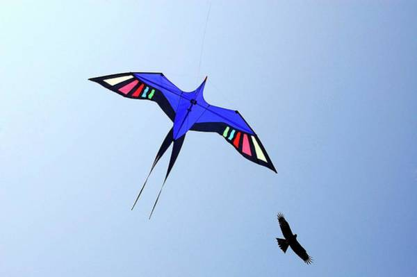 Kite Festival Wall Art - Photograph - Kite Flying In Sky by Anand Purohit
