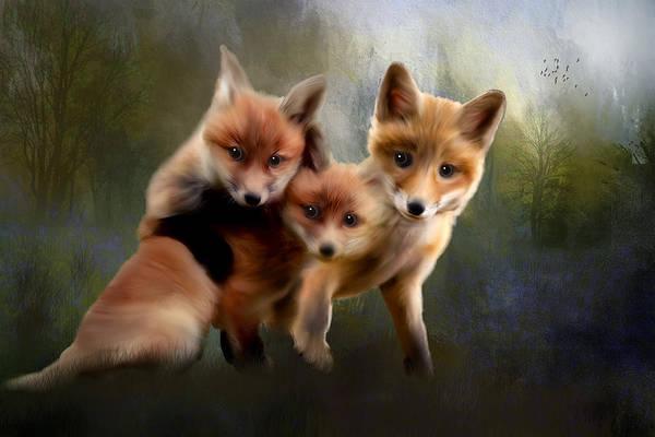 Fox Mixed Media - Kits by Tim Palmer