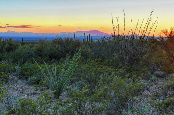 Photograph - Kitt Peak And Sonoran Desert by Chance Kafka