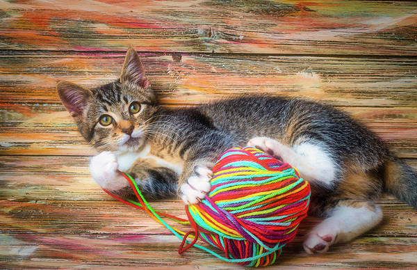 Wall Art - Photograph - Kitten And Ball Of Yarn by Garry Gay