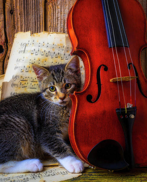 Photograph - Kitten And Violin by Garry Gay