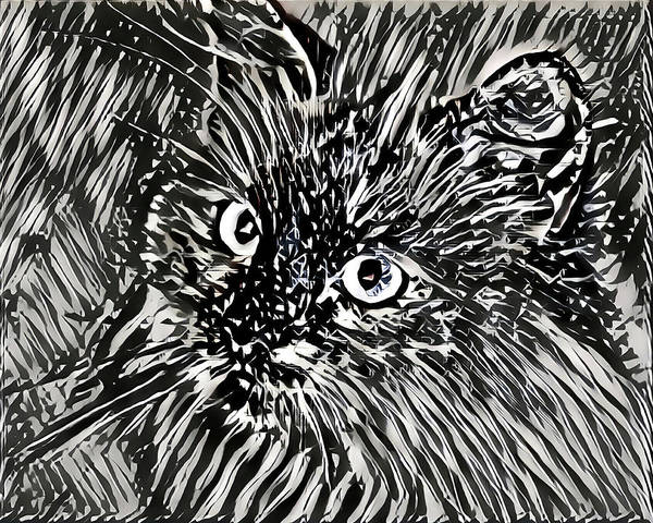 Digital Art - Kitten Black And White Stripes by Don Northup
