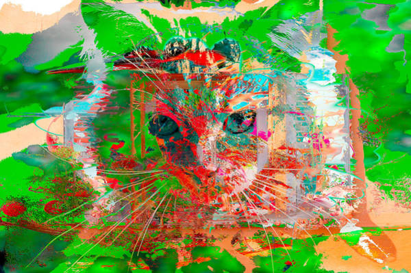 Photograph - Kitten Collage Abstract by Don Northup