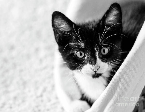 Photograph - Kitten In A Basket by Pam  Holdsworth