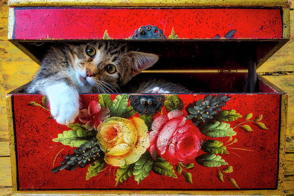 Wall Art - Photograph - Kitten In Red Wooden Box by Garry Gay