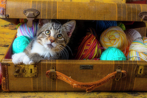 Wall Art - Photograph - Kitten In Suitcase Full Of Yarn by Garry Gay
