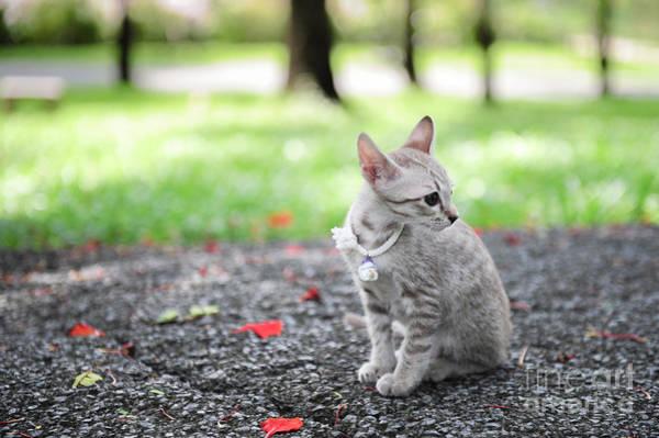 Wall Art - Photograph - Kitten In The Garden by Mrtiger