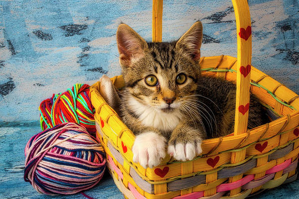 Wall Art - Photograph - Kitten In Yellow Basket With Yarn by Garry Gay