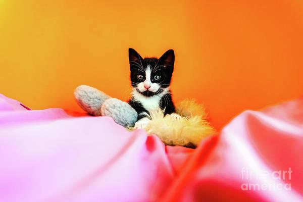 Photograph - Kitten Isolating On Orange Background Staring At Camera. by Joaquin Corbalan