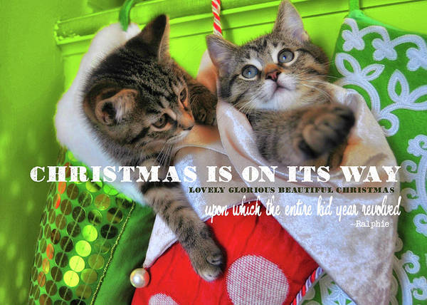 Photograph - Kitten Kristmas Quote by JAMART Photography