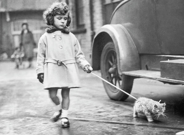 Looking Down Photograph - Kitten On Lead by Fox Photos