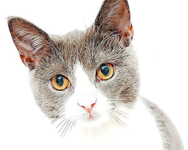 Digital Art - Kitten by Pennie McCracken