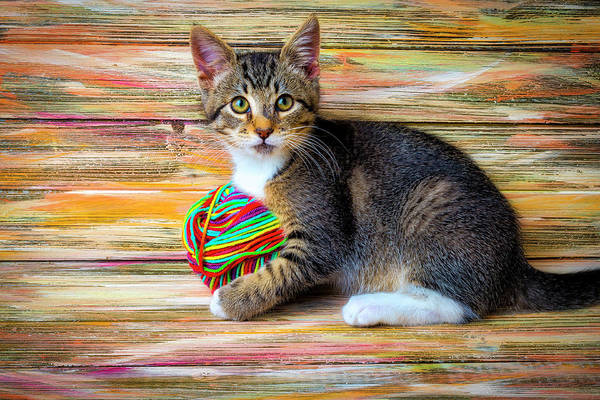 Wall Art - Photograph - Kitten Playing With Yarn by Garry Gay