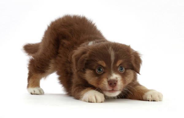 Photograph - Kitten Puppy by Warren Photographic