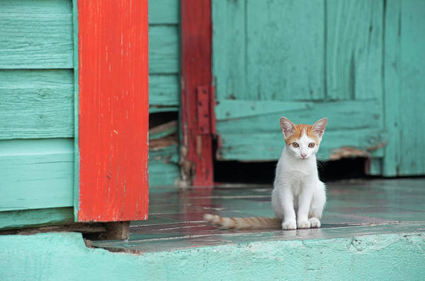 Orange Tabby Photograph - Kitten Sitting On The Porch Of A by Dallas Stribley
