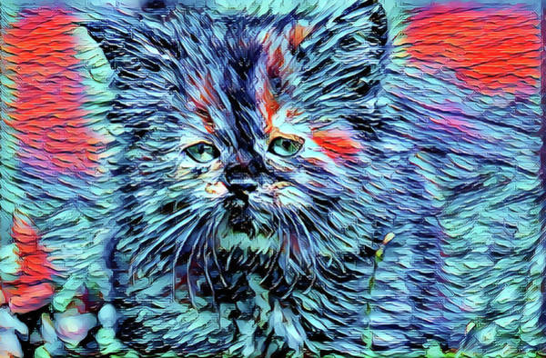 Digital Art - Kitten With The Blues by Don Northup