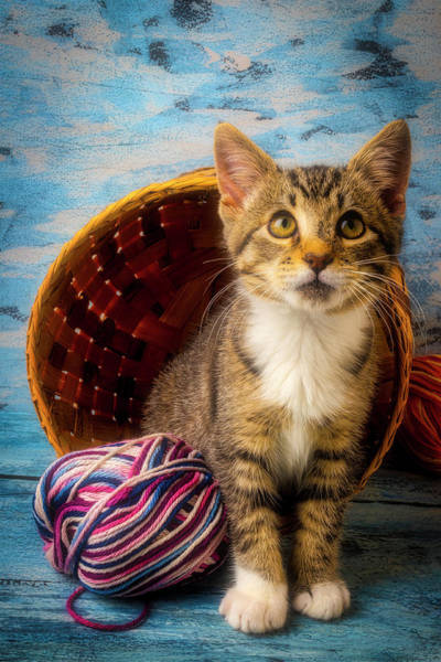 Wall Art - Photograph - Kitten With Yarn And Basket by Garry Gay