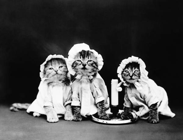 Wall Art - Photograph - Kittens At Bedtime - Harry Whittier Frees by War Is Hell Store