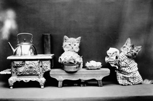 Wall Art - Photograph - Kittens Washing Dishes - Harry Whittier Frees - 1914 by War Is Hell Store