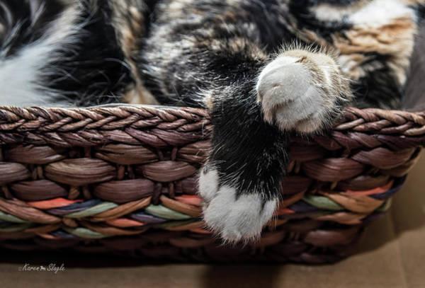 Photograph - Kitty Paws by Karen Slagle