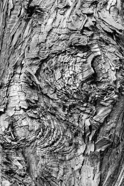 Photograph - Knock On Wood by Silvia Marcoschamer