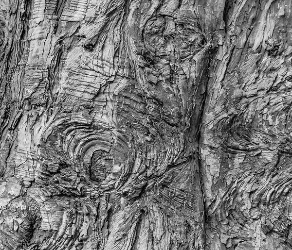 Photograph - Knots Of Wood by Silvia Marcoschamer